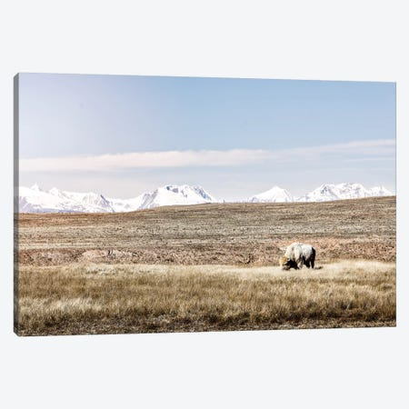 White Buffalo And Mountains Canvas Print #TEJ74} by Teri James Canvas Print