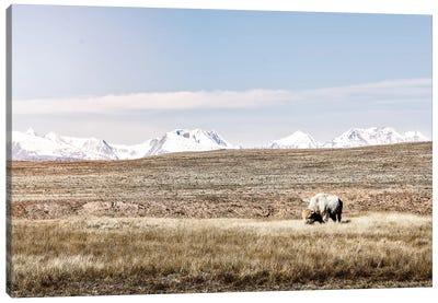 White Buffalo And Mountains Canvas Art Print