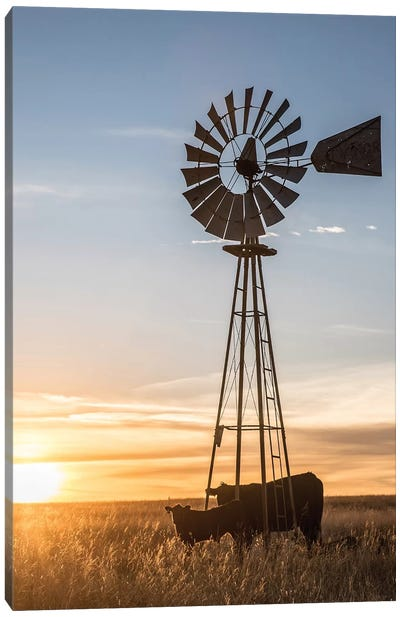 Windmill And Angus Cow Canvas Art Print