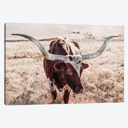 Texas Longhorn Cow Farmhouse Colors Canvas Print #TEJ85} by Teri James Canvas Art