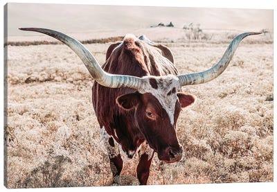 Texas Longhorn Cow Farmhouse Colors Canvas Art Print