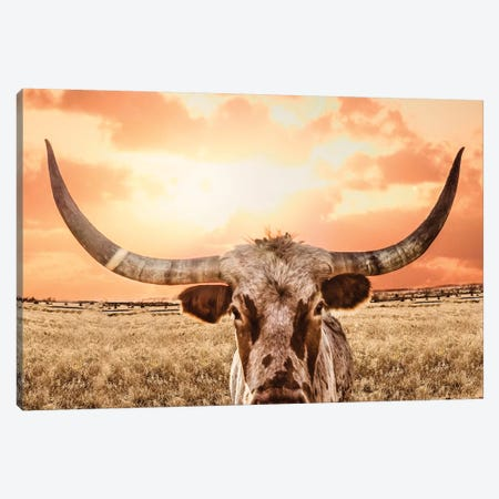 Texas Longhorn Cow & Orange Sunset Canvas Print #TEJ87} by Teri James Canvas Art