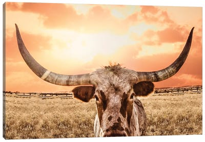 Texas Longhorn Cow & Orange Sunset Canvas Art Print