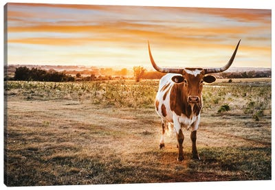 Longhorn And Yellow Sunset Canvas Art Print