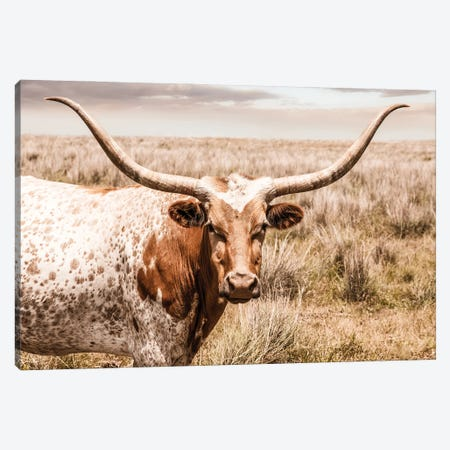Longhorn Red Cow Canvas Print #TEJ90} by Teri James Canvas Wall Art