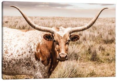Longhorn Red Cow Canvas Art Print