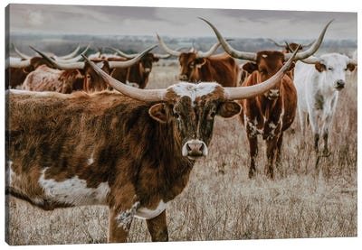 Longhorns In The Background Canvas Art Print