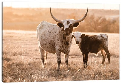 Longhorn White Speck With Calf Canvas Art Print