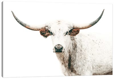 Longhorn White On White Canvas Art Print