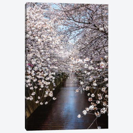 Cherry Blossoms In Tokyo III Canvas Print #TEO1102} by Matteo Colombo Canvas Art