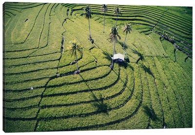 At The Rice Paddies, Philippines Canvas Art Print