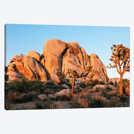 Sunset At Joshua Tree National Park, California Canvas Print #TEO166} by Matteo Colombo Canvas Artwork
