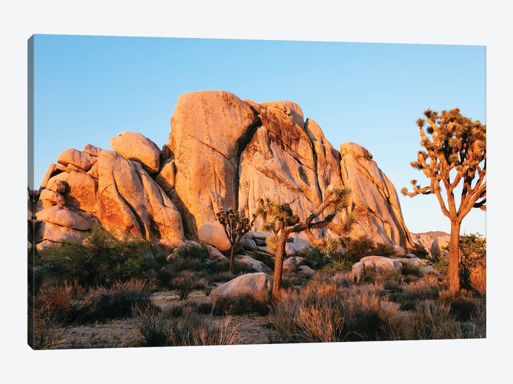 Sunset At Joshua Tree National Park, California by Matteo Colombo 1-piece Canvas Art Print