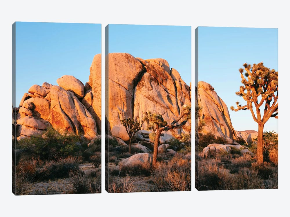 Sunset At Joshua Tree National Park, California by Matteo Colombo 3-piece Canvas Art Print
