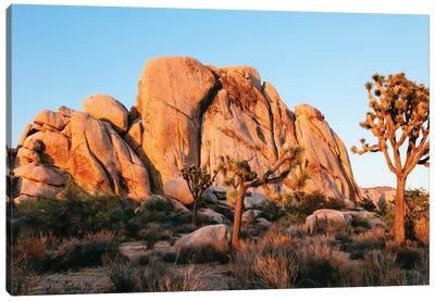 Sunset At Joshua Tree National Park, California Canvas Art Print