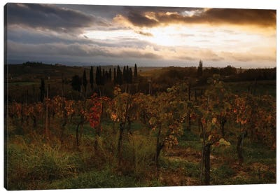 Autumn Sunrise, Tuscany, Italy Canvas Print #TEO16