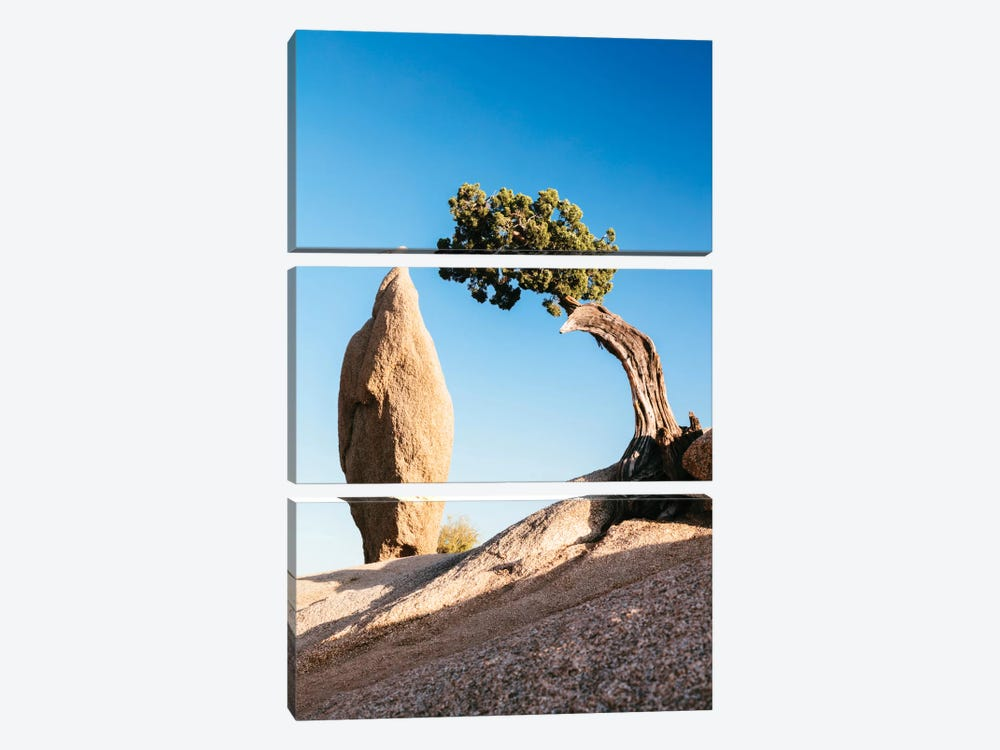 Balance Rock And A Lone Juniper, Joshua Tree National Park, California, USA by Matteo Colombo 3-piece Canvas Art