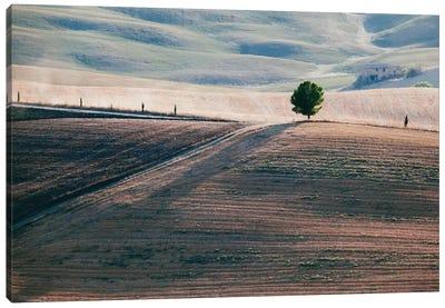 A Lone Tree, Tuscany, Italy Canvas Print #TEO1