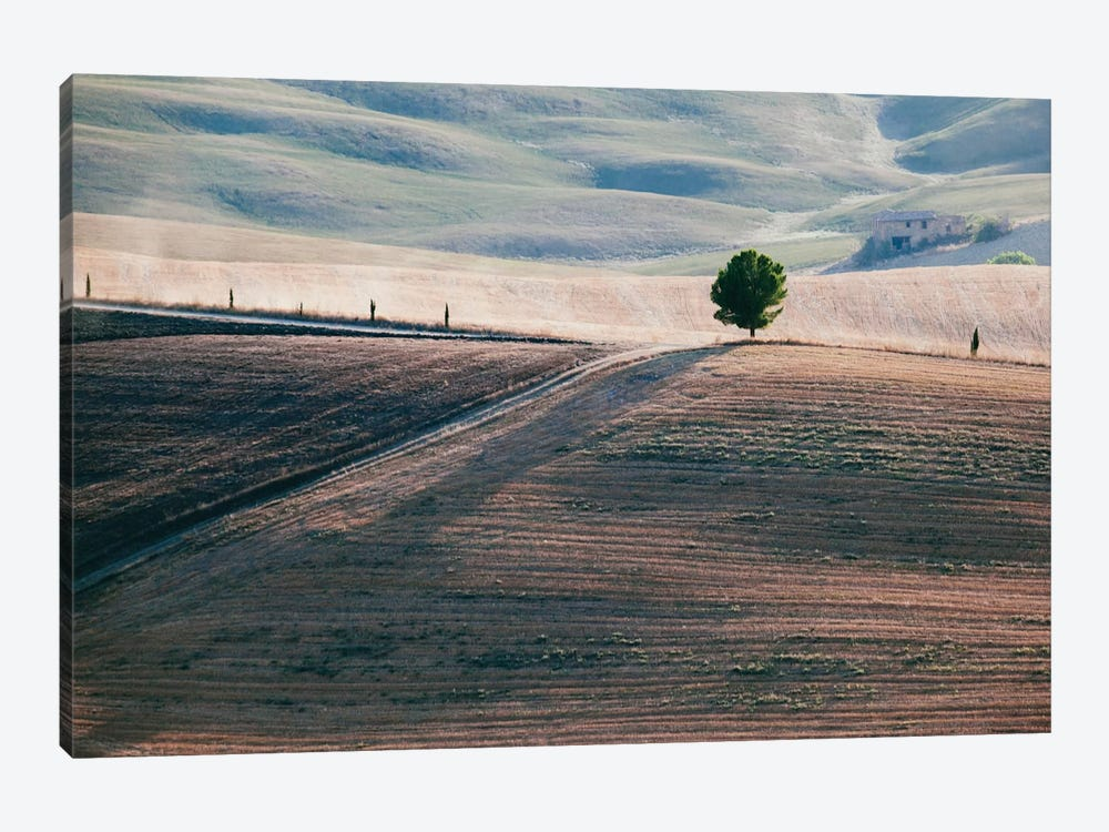 A Lone Tree, Tuscany, Italy by Matteo Colombo 1-piece Art Print