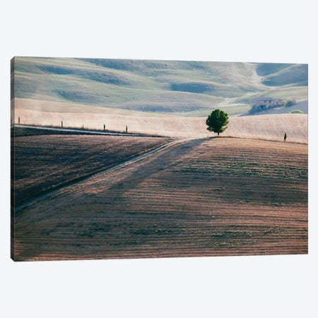 A Lone Tree, Tuscany, Italy Canvas Print #TEO1} by Matteo Colombo Canvas Art Print