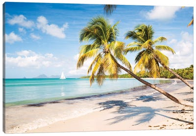 Famous Les Salines Beach In Martinique, Caribbean Canvas Art Print