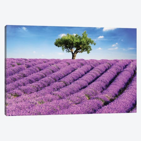 Lavender Field And Tree, Provence Canvas Print #TEO218} by Matteo Colombo Canvas Art Print