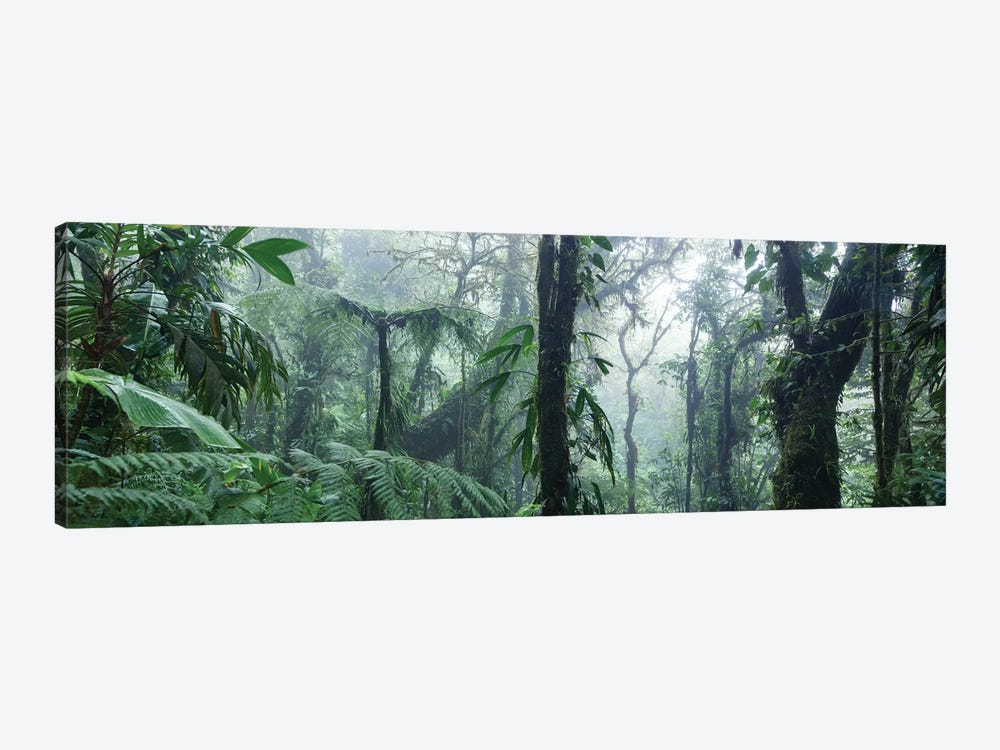 Monteverde Cloud Forest Panorama, Costa Rica by Matteo Colombo 1-piece Art Print