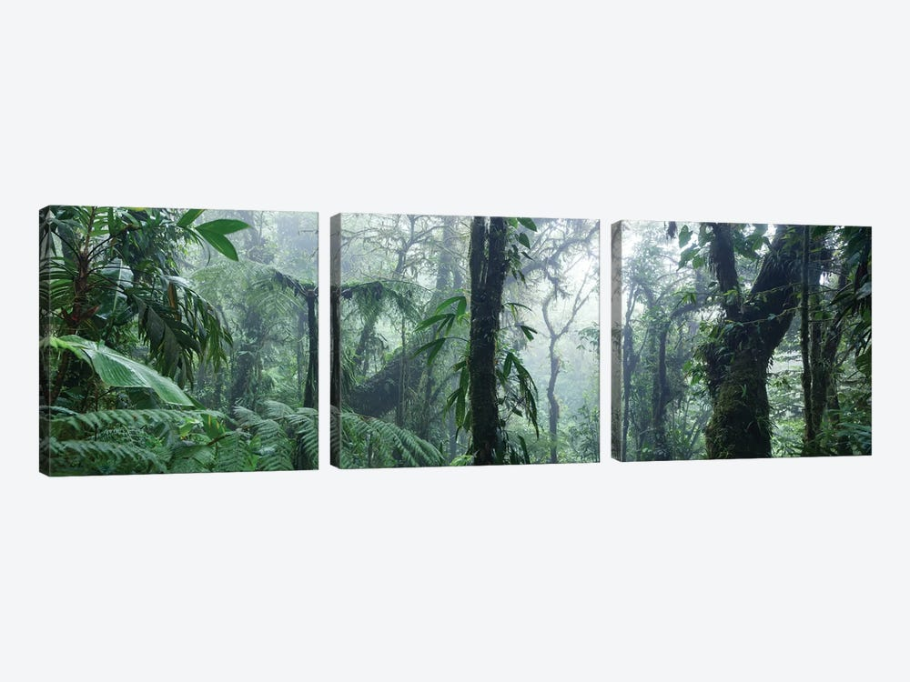 Monteverde Cloud Forest Panorama, Costa Rica by Matteo Colombo 3-piece Canvas Print