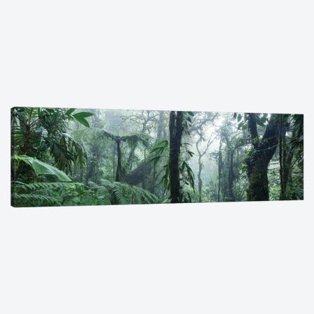 Monteverde Cloud Forest Panorama, Costa Rica Canvas Print #TEO224} by Matteo Colombo Canvas Art Print