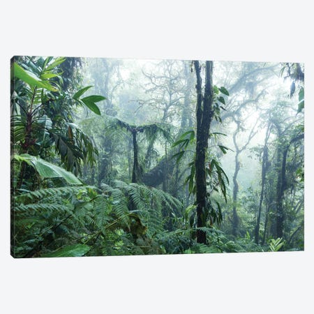 Monteverde Cloud Forest, Costa Rica Canvas Print #TEO225} by Matteo Colombo Canvas Print