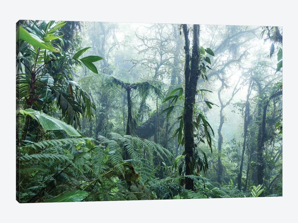Monteverde Cloud Forest, Costa Rica by Matteo Colombo 1-piece Canvas Wall Art
