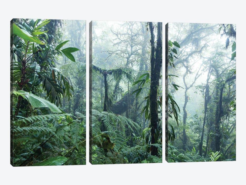 Monteverde Cloud Forest, Costa Rica by Matteo Colombo 3-piece Canvas Art
