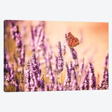 Butterfly In Lavender Field, Provence, France Canvas Print #TEO23} by Matteo Colombo Canvas Art