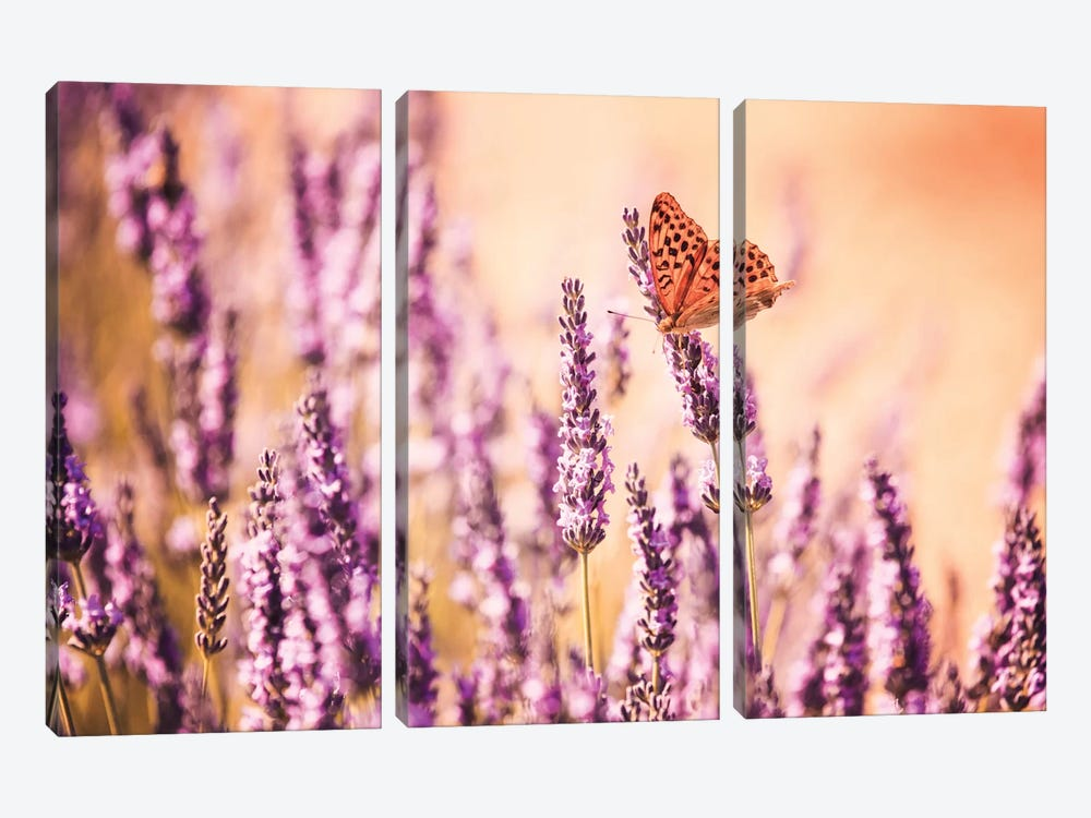 Butterfly In Lavender Field, Provence, France by Matteo Colombo 3-piece Canvas Art Print