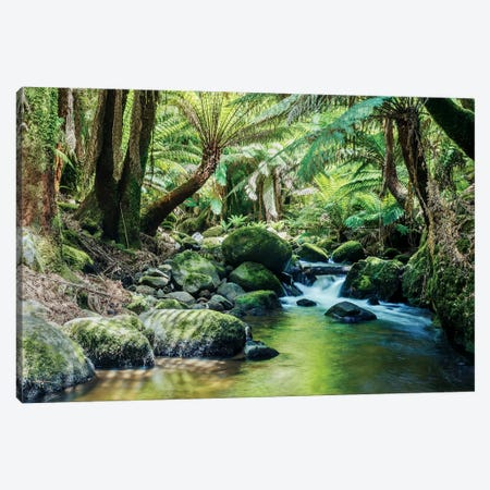 River In The Tasmanian Rainforest Canvas Print #TEO243} by Matteo Colombo Canvas Art