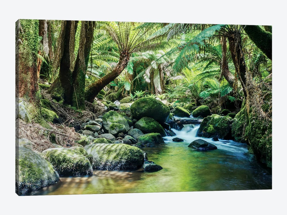 River In The Tasmanian Rainforest 1-piece Canvas Art