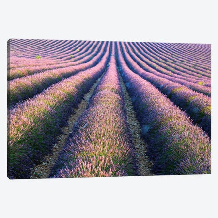 Rows Of Lavender In Provence Canvas Print #TEO245} by Matteo Colombo Canvas Print