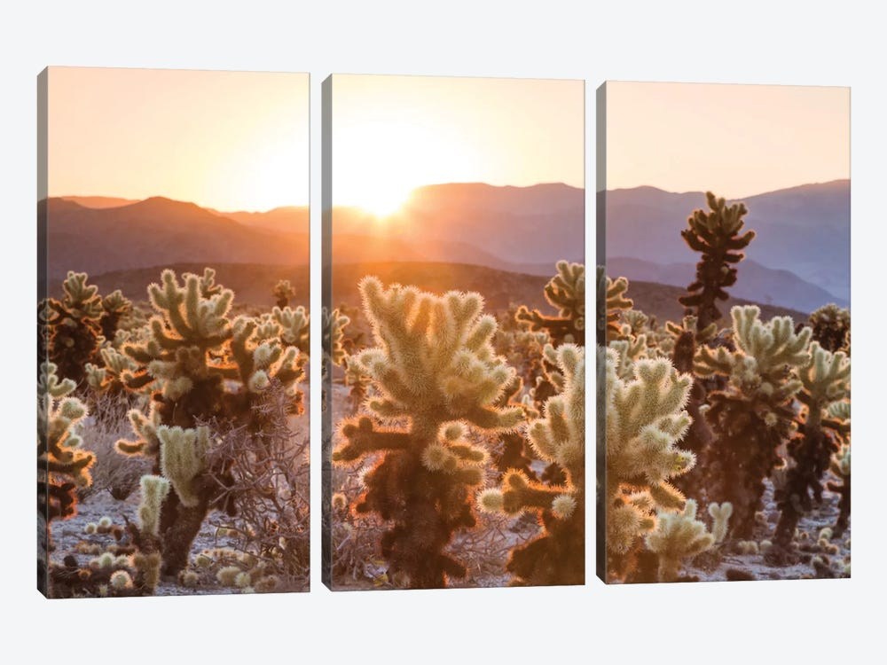 Cactus Garden, Joshua Tree National Park, California, USA by Matteo Colombo 3-piece Canvas Print
