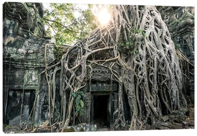 Temple In The Jungle, Angkor Wat, Cambodia Canvas Art Print
