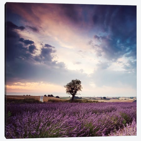 Tree In Lavender Field, Provence Canvas Print #TEO268} by Matteo Colombo Canvas Art