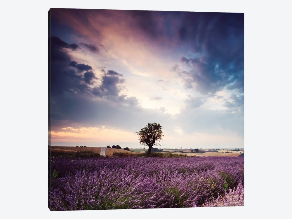 Tree In Lavender Field, Provence by Matteo Colombo 1-piece Canvas Art Print