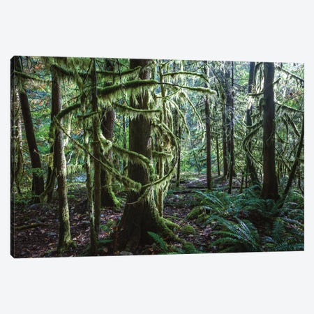 Rainforest, Vancouver, Canada Canvas Print #TEO319} by Matteo Colombo Canvas Art