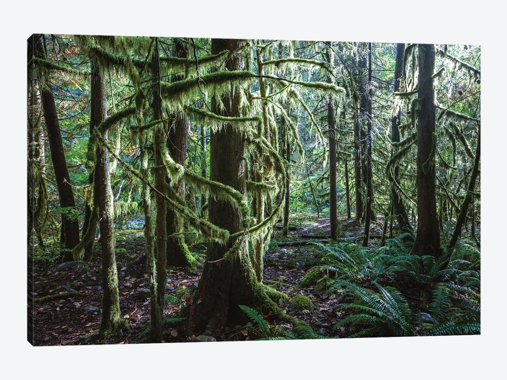 Rainforest, Vancouver, Canada 1-piece Canvas Art