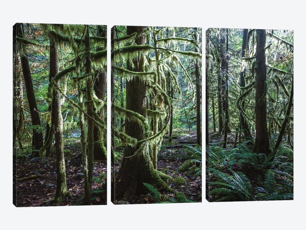 Rainforest, Vancouver, Canada 3-piece Canvas Artwork