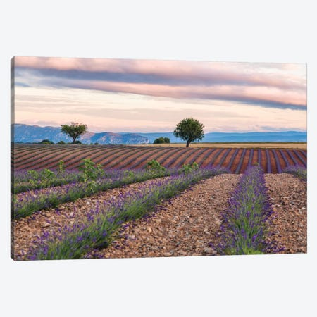 Countryside Landscape At Sunrise, Provence, France Canvas Print #TEO32} by Matteo Colombo Canvas Art Print