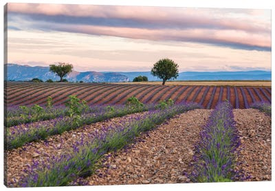 Countryside Landscape At Sunrise, Provence, France Canvas Art Print
