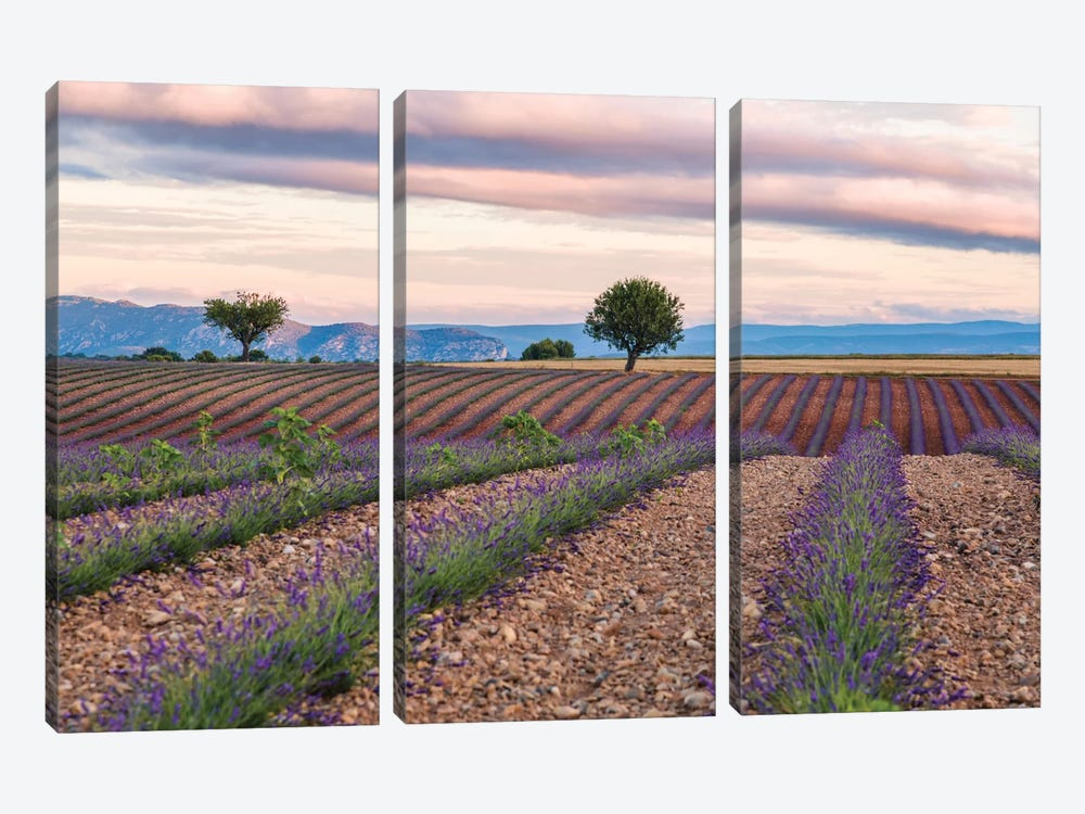 Countryside Landscape At Sunrise, Provence, France by Matteo Colombo 3-piece Canvas Art Print