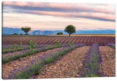 Countryside Landscape At Sunrise, Provence, France Canvas Art Print