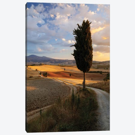 Countryside Sunset, Val d'Orcia, Tuscany, Italy Canvas Print #TEO33} by Matteo Colombo Canvas Art Print