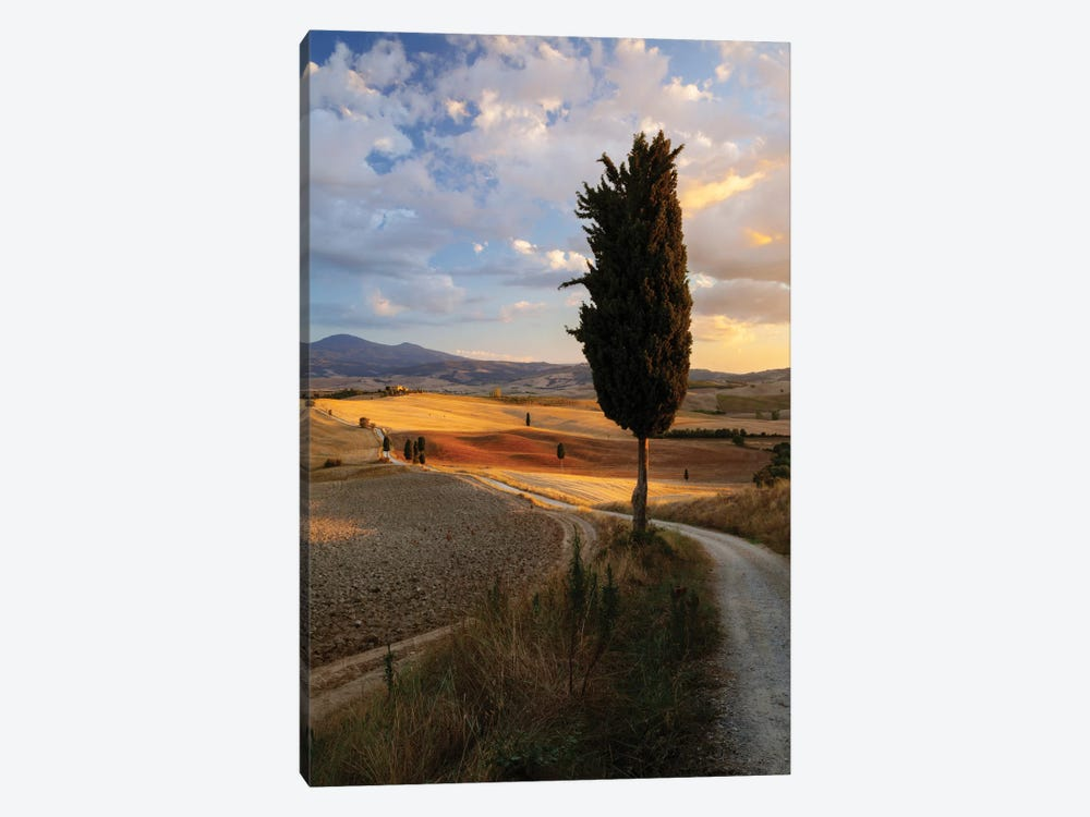 Countryside Sunset, Val d'Orcia, Tuscany, Italy by Matteo Colombo 1-piece Canvas Wall Art